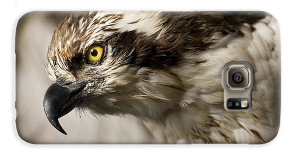 Osprey Galaxy S6 Case by Adam Romanowicz