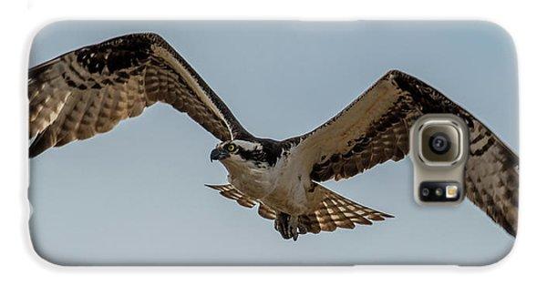Osprey Flying Galaxy S6 Case by Paul Freidlund