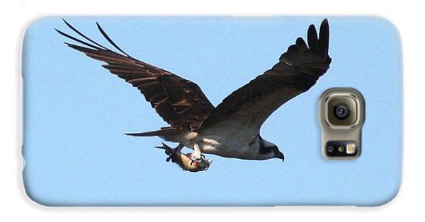 Osprey With Fish Galaxy S6 Case by Carol Groenen