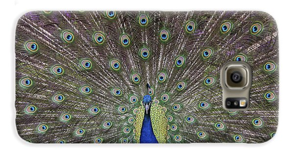 Peacock Display Galaxy S6 Case by Tim Gainey