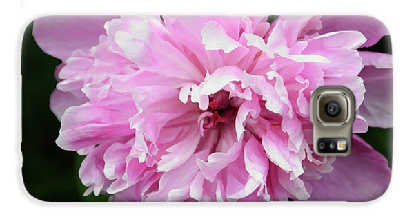 Peony Perfection Samsung Galaxy Case by Angelina Vick