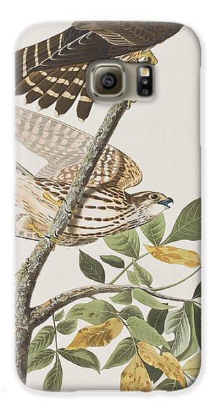 Pigeon Hawk Galaxy S6 Case by John James Audubon