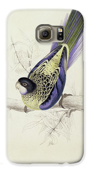 Platycercus Brownii, Or Browns Parakeet Galaxy S6 Case by Edward Lear