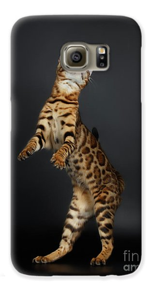 Playful Female Bengal Cat Stands On Rear Legs Galaxy S6 Case by Sergey Taran