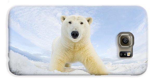 Polar Bear  Ursus Maritimus , Curious Galaxy S6 Case by Steven Kazlowski