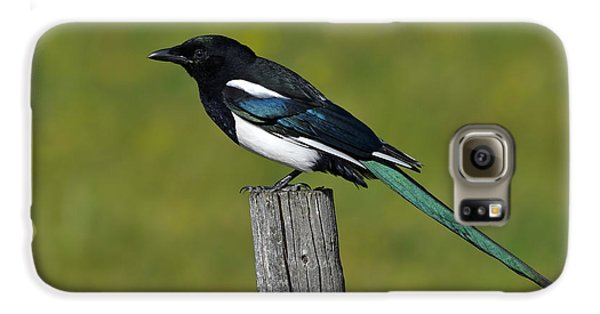 Prairie Perch Galaxy S6 Case by Tony Beck