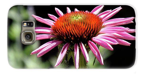 Pretty Pink Coneflower Galaxy S6 Case by Rona Black