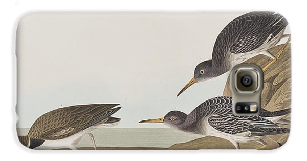 Purple Sandpiper Galaxy S6 Case by John James Audubon