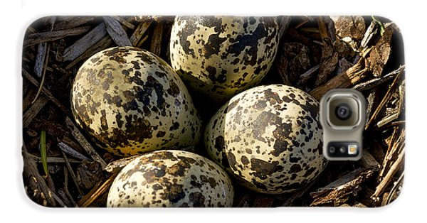 Quartet Of Killdeer Eggs By Jean Noren Galaxy S6 Case by Jean Noren