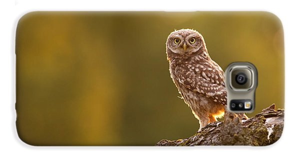 Qui, Moi? Little Owlet In Warm Light Galaxy S6 Case by Roeselien Raimond