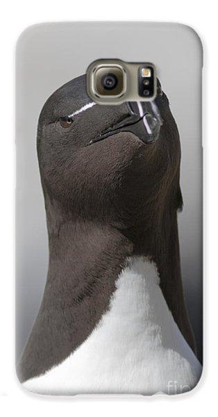 Razorbill Galaxy S6 Case by Karen Van Der Zijden