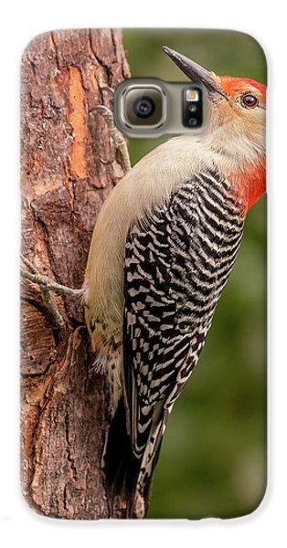 Red Bellied Woodpecker 3 Galaxy S6 Case by Jim Hughes