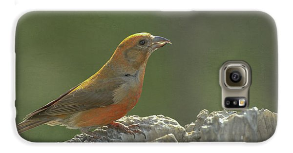 Red Crossbill Galaxy S6 Case by Constance Puttkemery