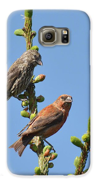 Red Crossbill Pair Galaxy S6 Case by Alan Lenk
