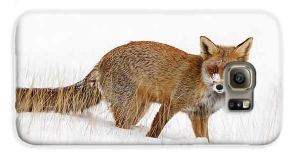Red Fox In A Snow Covered Scene Galaxy S6 Case by Roeselien Raimond