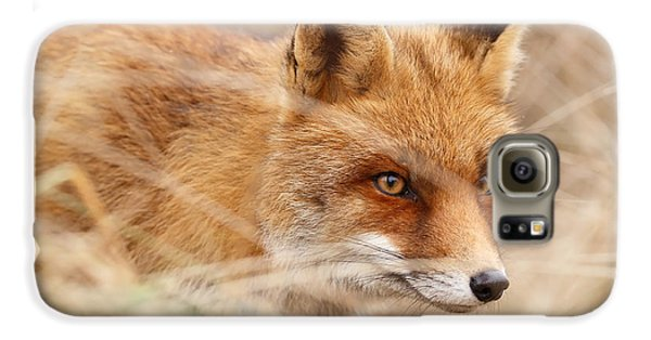 Red Fox On The Hunt Galaxy S6 Case by Roeselien Raimond