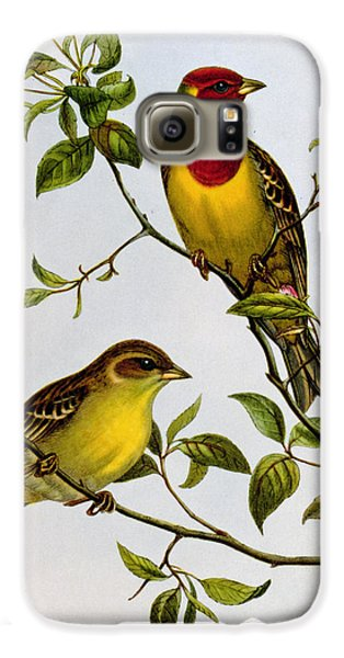 Red Headed Bunting Galaxy S6 Case by John Gould