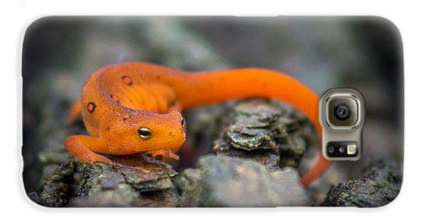 Red Spotted Newt Galaxy S6 Case by Chris Bordeleau