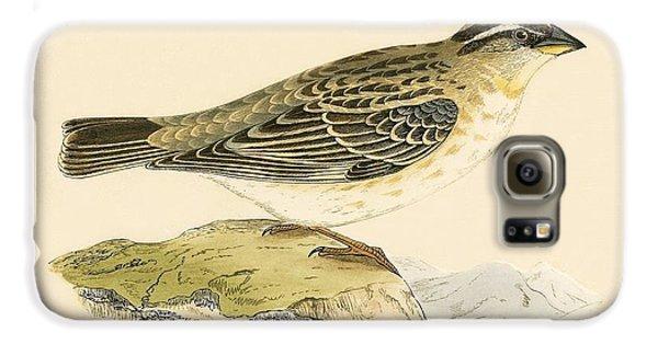 Rock Sparrow Galaxy S6 Case by English School