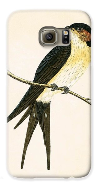 Rufous Swallow Galaxy S6 Case by English School