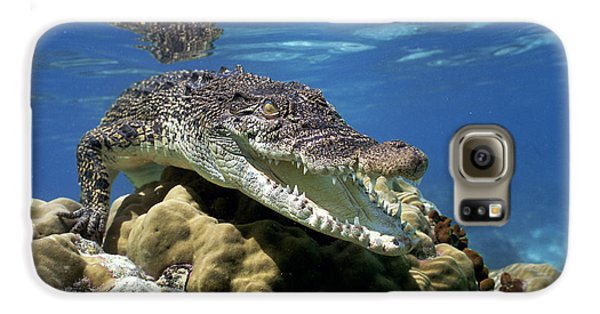 Saltwater Crocodile Smile Galaxy S6 Case by Mike Parry