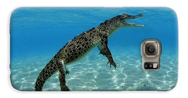 Saltwater Crocodile Galaxy S6 Case by Franco Banfi and Photo Researchers