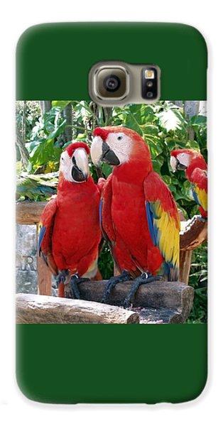 Scarlet Macaws Galaxy S6 Case by Ellen Henneke