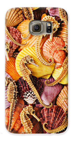 Sea Horses And Sea Shells Galaxy S6 Case by Garry Gay