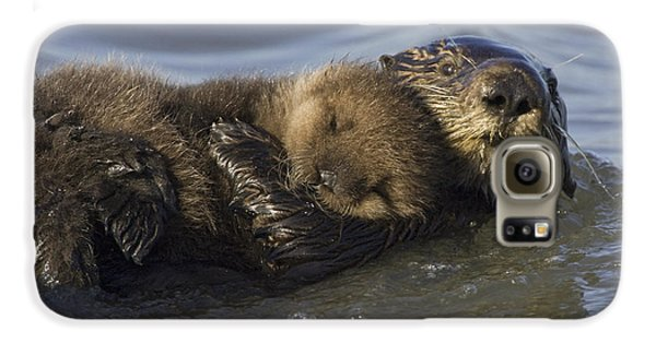 Sea Otter Mother With Pup Monterey Bay Galaxy S6 Case by Suzi Eszterhas