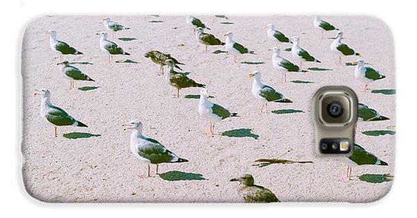 Seagulls  Galaxy S6 Case by Ariane Moshayedi