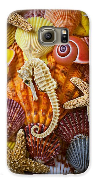 Seahorse And Assorted Sea Shells Galaxy S6 Case by Garry Gay