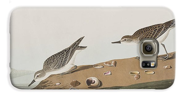 Semipalmated Sandpiper Galaxy S6 Case by John James Audubon