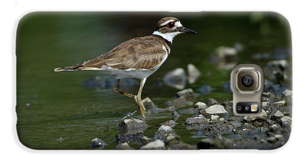Killdeer  Galaxy S6 Case by Douglas Stucky