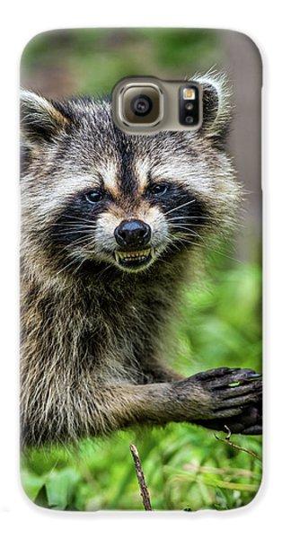 Smiling Raccoon Galaxy S6 Case by Paul Freidlund