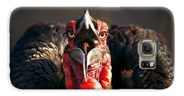 Southern Ground Hornbill Swallowing A Seed Galaxy S6 Case by Johan Swanepoel