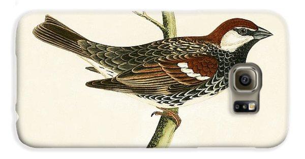 Spanish Sparrow Galaxy S6 Case by English School