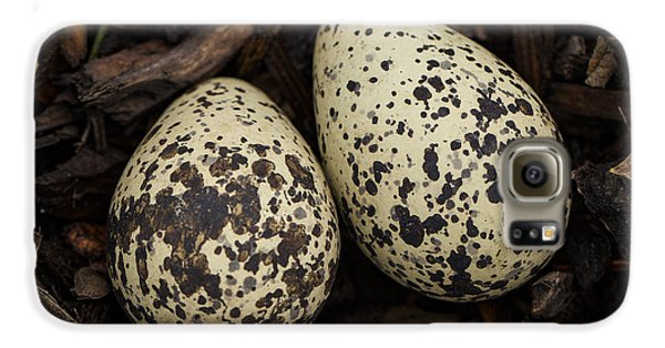 Speckled Killdeer Eggs By Jean Noren Galaxy S6 Case by Jean Noren