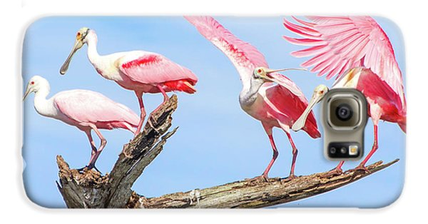 Spoonbill Party Galaxy S6 Case by Mark Andrew Thomas