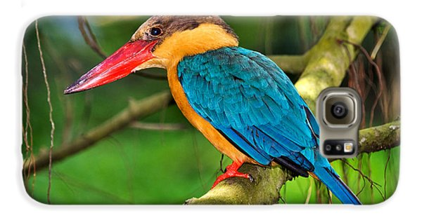 Stork-billed Kingfisher Galaxy S6 Case by Louise Heusinkveld