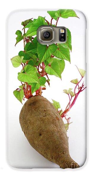 Sweet Potato Galaxy S6 Case by Gaspar Avila