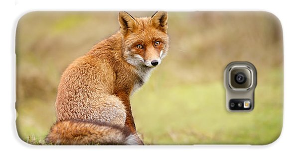 That Look - Red Fox Male Galaxy S6 Case by Roeselien Raimond