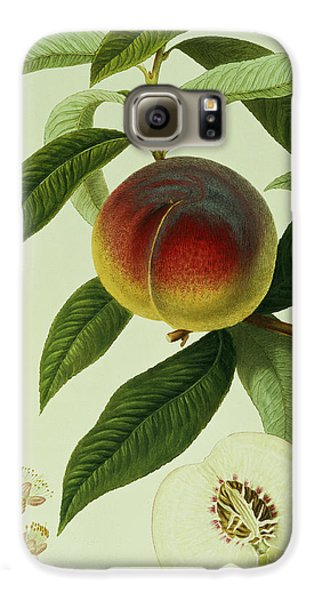The Galande Peach Galaxy S6 Case by William Hooker