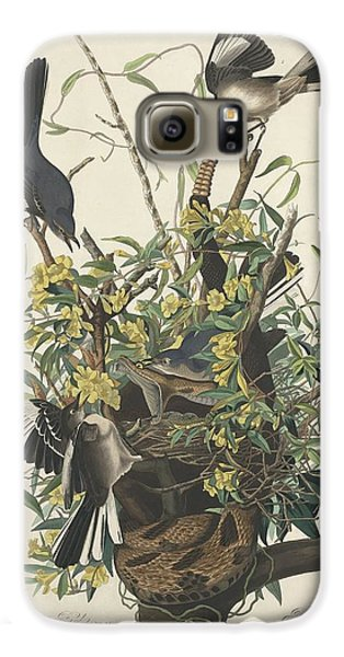 The Mockingbird Galaxy S6 Case by John James Audubon