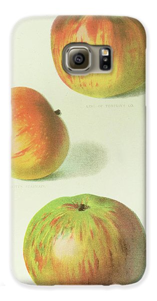 Three Apples Galaxy S6 Case by English School
