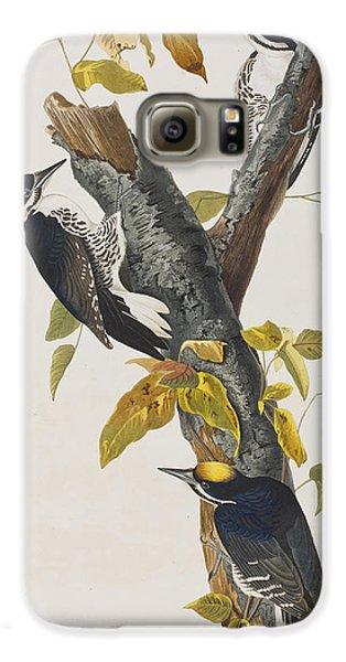 Three Toed Woodpecker Galaxy S6 Case by John James Audubon