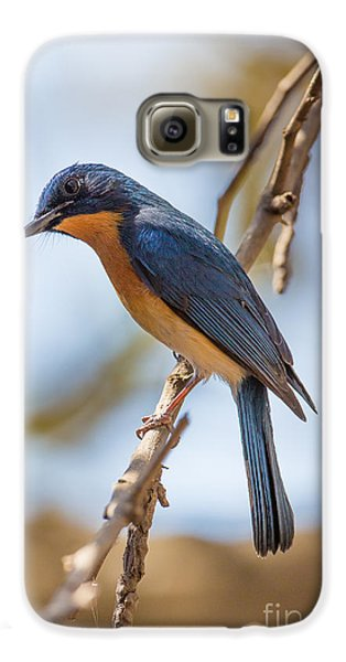 Tickells Blue Flycatcher, India Galaxy S6 Case by B. G. Thomson