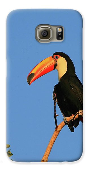 Toco Toucan Galaxy S6 Case by Bruce J Robinson