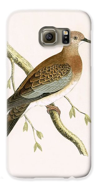 Turtle Dove Galaxy S6 Case by English School
