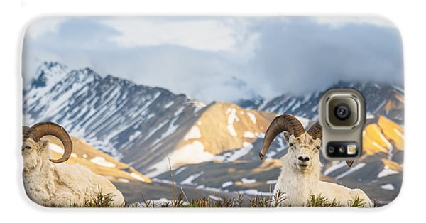 Two Adult Dall Sheep Rams Resting Galaxy S6 Case by Michael Jones