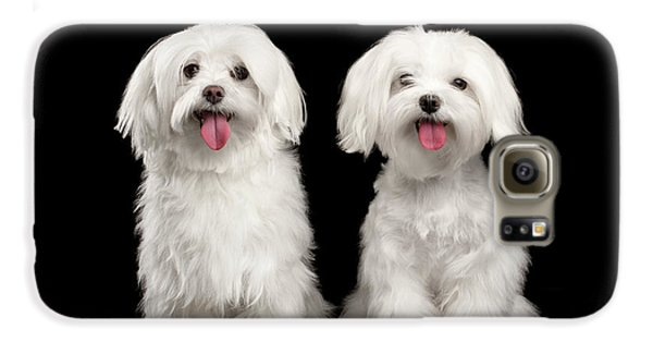 Two Happy White Maltese Dogs Sitting, Looking In Camera Isolated Galaxy S6 Case by Sergey Taran